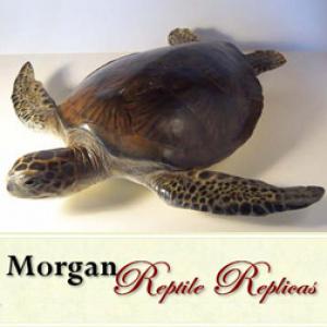 MORGAN REPTILE REPLICAS